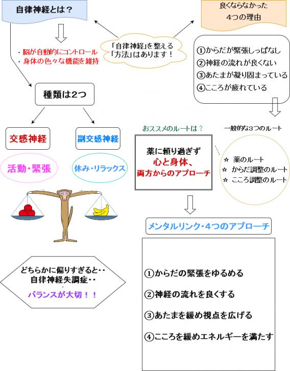 自律神経図解3
